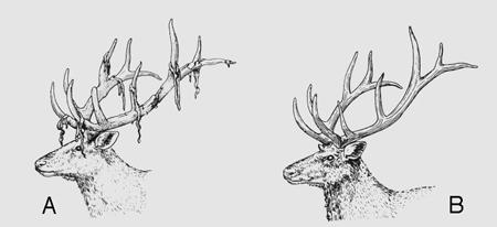 Bois-de-cerfs-(Beaumont-&-Cassier)-450.jpg