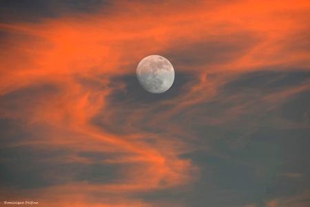 Delfino-lune enflammée-450.jpg