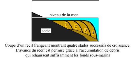 01Récif_frangeant1-1.jpg