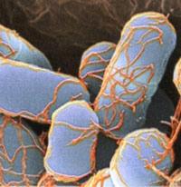 Escherichia-coli-logo-200.jpg