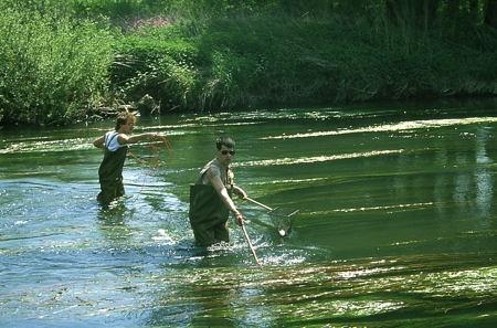 pêche-électrique_019-1.jpg