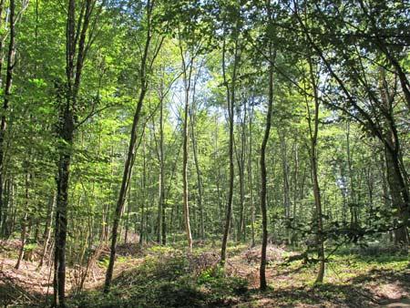 Forêt-de-Thise_07-parcelle-41-groupe-de-jeunesse-450.jpg