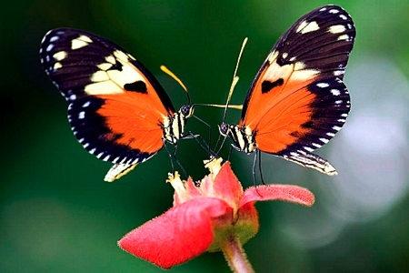 1-pollinisateurs-film-pollen-1.jpg