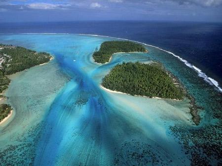 coraux,antilles,cnidaires,anthozoaires,scléractiniaires,madrépores,récif corallien,caraïbe