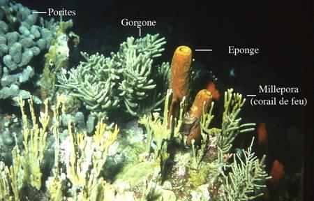 136Récif corallien2-1.jpg