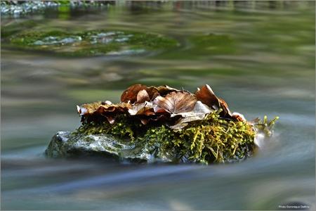 dominique delfino,photographe naturaliste et animalier,pays de montbéliard,la creuse,le gland,la doue,karst