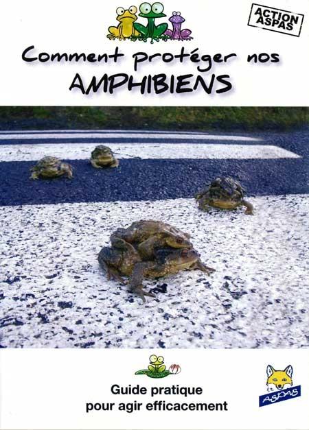 Amphibiens_1-450.jpg