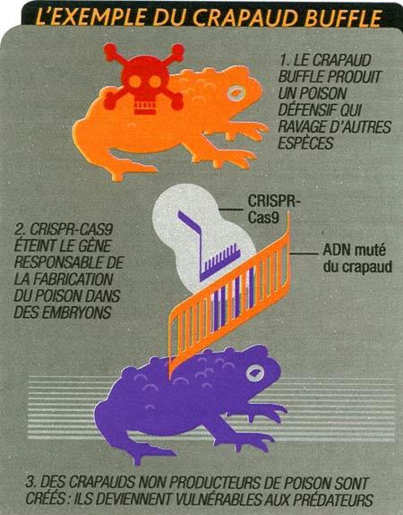Crisp_024-Exemple-du-crapaud-buffle-450.jpg