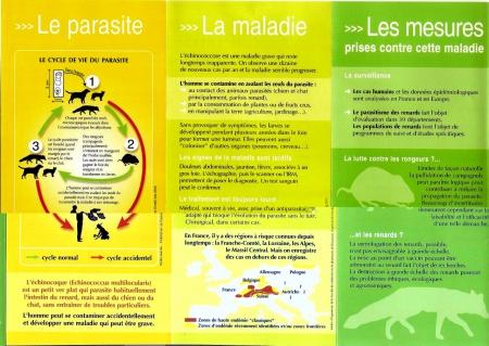 santé,parasites,plathelminthes,ténia échinocoque,échinoccose alvéolaire,franche-comté,campagnol,renard,chien,chat