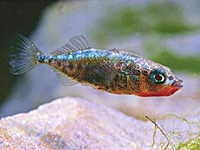 poissons d'eau douce,france,livres,muséum national d'histoire naturelle,mnhn