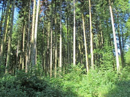 Forêt-de-Thise_14-parcelle-41-résineux-450.jpg
