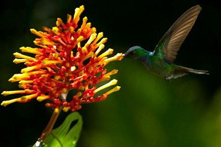 4-colibri-1.jpg